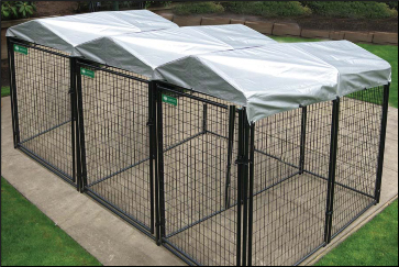 Modular dog kennels set up in an adjoining configuration