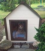 Climates Master Dog House Testimonial